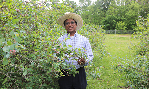 Dr. Girish Panicker Elected to Southern Cover Crop Council Board of Directors